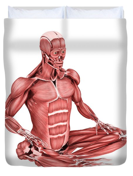Medical Illustration Of Male Muscles Duvet Cover