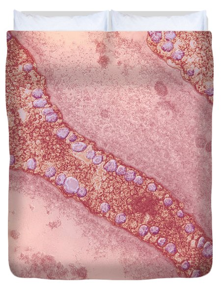 Pinocytosis Duvet Cover by David M. Phillips