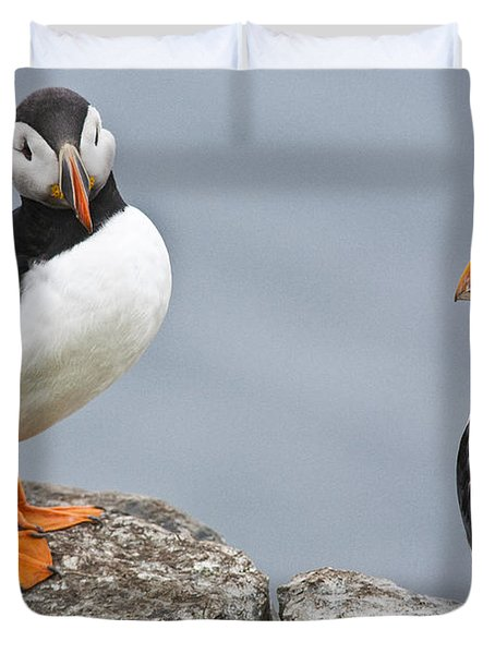 Puffins Duvet Cover by Heiko Koehrer-Wagner