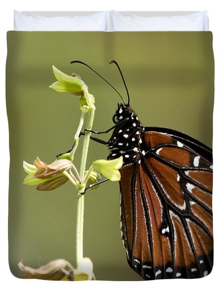 Duvet Cover featuring the photograph Queen Butterfly by Meg Rousher