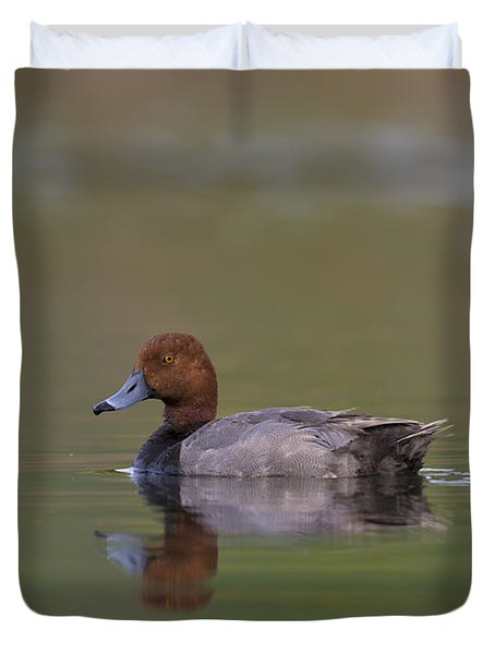 Redhead Duck In Small Marsh Pond Duvet Cover