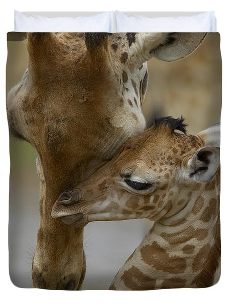Duvet Cover featuring the photograph Rothschild Giraffe And Calf by San Diego Zoo