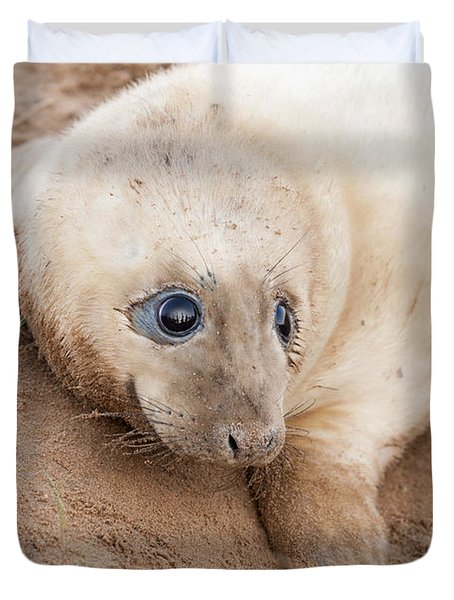 Seal Pup Duvet Cover