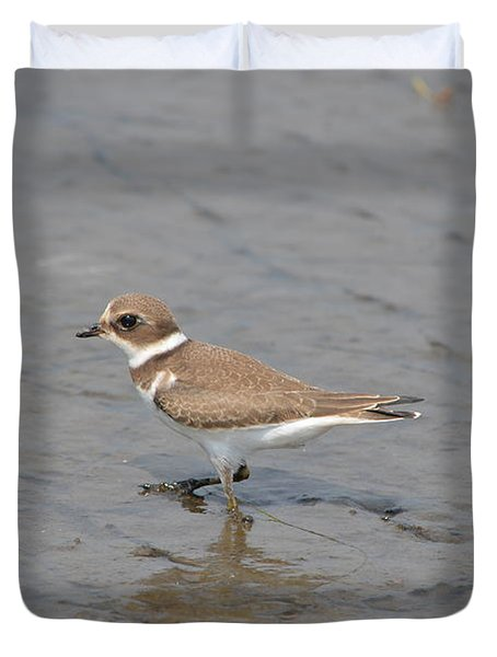 Duvet Cover featuring the photograph Semipalmated Plover by James Petersen