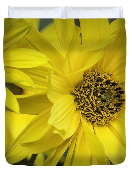 Sunflowers Duvet Cover by Fran Gallogly