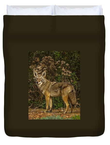 The Coyote Duvet Cover