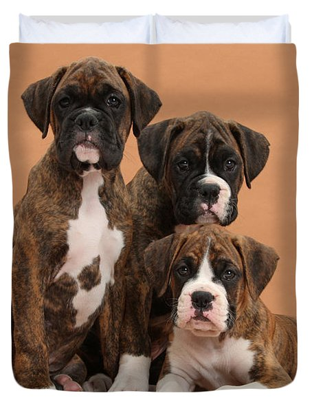 Three Boxer Puppies Duvet Cover by Mark Taylor