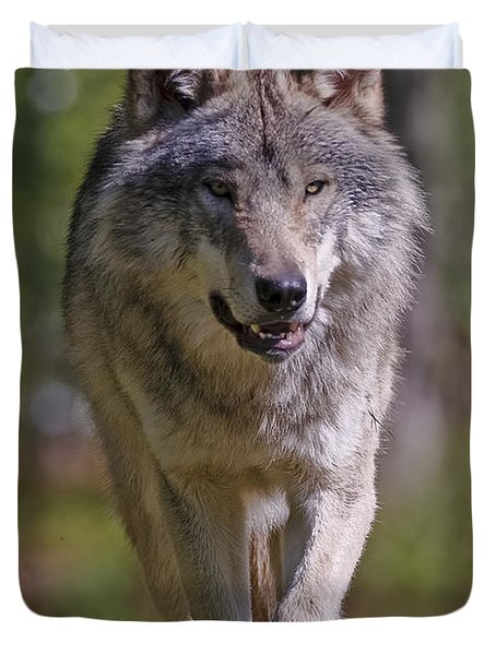Duvet Cover featuring the photograph Timber Wolf  by Wolves Only