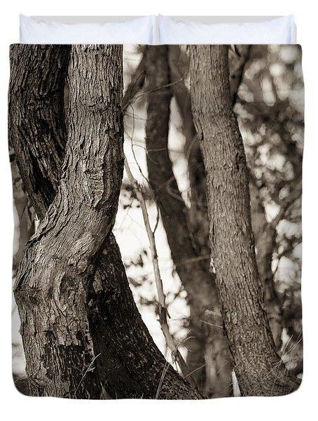 Trees Duvet Cover by Steven Ralser
