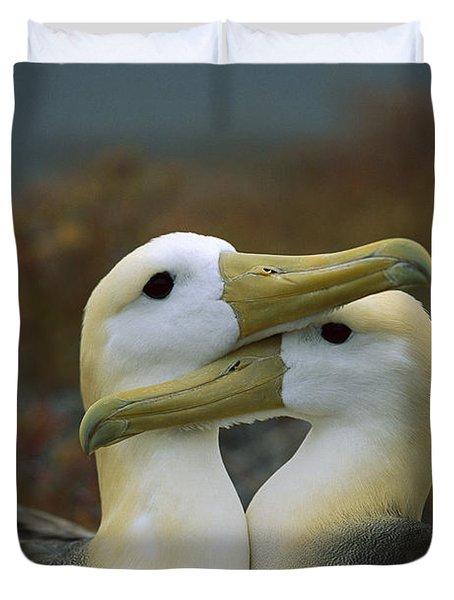 Waved Albatross Pair Bonding Galapagos Duvet Cover by Tui De Roy