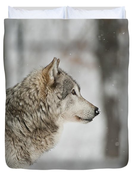 Timber Wolf Pictures Duvet Cover by Wolves Only
