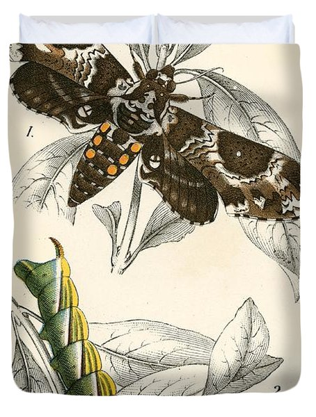 Butterflies Duvet Cover by English School