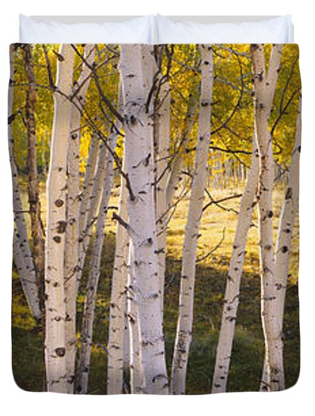 Aspen Trees In A Forest, Telluride, San Duvet Cover
