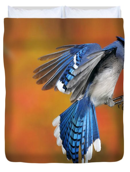 Blue Jay Duvet Cover by Scott Linstead
