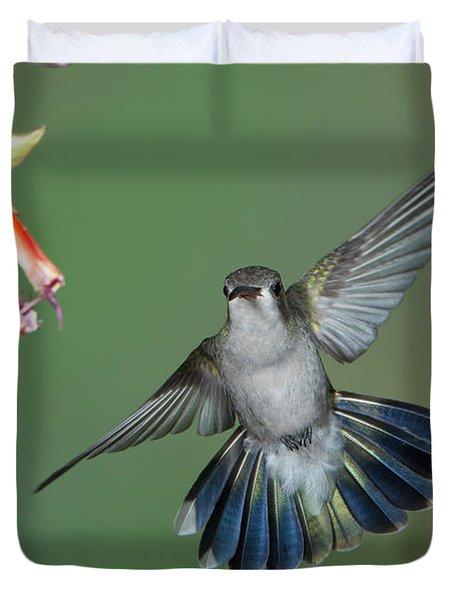 Broad-billed Hummingbird Duvet Cover by Anthony Mercieca