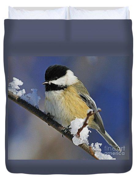 Winter Chickadee... Duvet Cover by Nina Stavlund