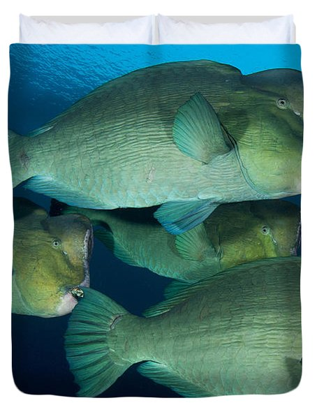 Large School Of Bumphead Parrotfish Duvet Cover by Steve Jones