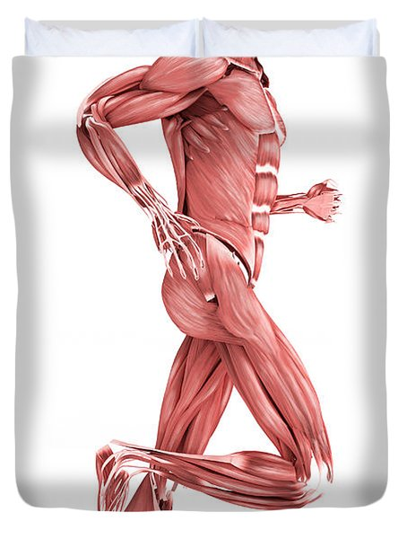 Medical Illustration Of Male Muscles Duvet Cover by Stocktrek Images
