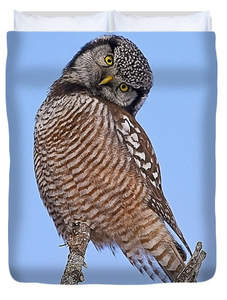 Northern Hawk Owl Duvet Cover by John Vose