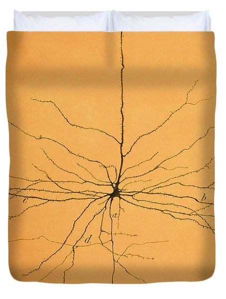 Pyramidal Cell In Cerebral Cortex, Cajal Duvet Cover