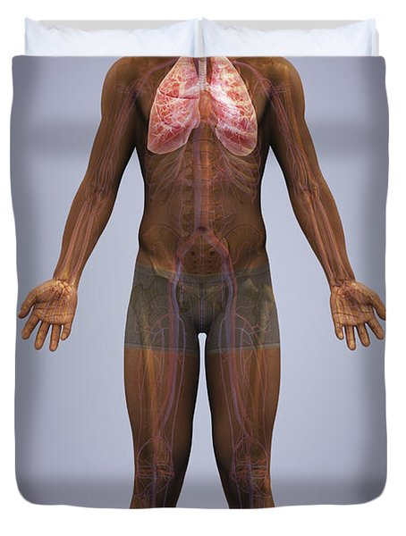 The Lungs And Cardiovascular System Duvet Cover