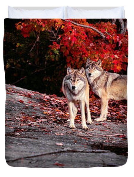 Timber Wolves Under A Red Maple Tree - Pano Duvet Cover