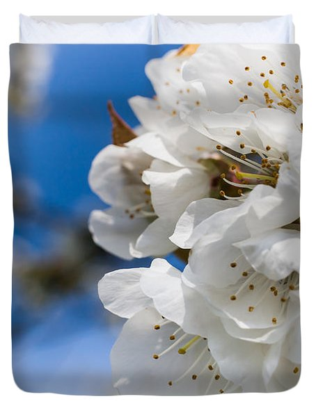 White Cherry Blossoms Blooming In The Springtime Duvet Cover by Nila Newsom