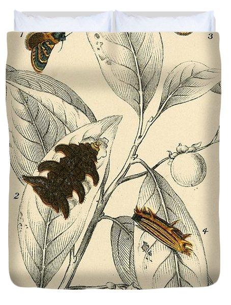 Butterflies Duvet Cover by English School