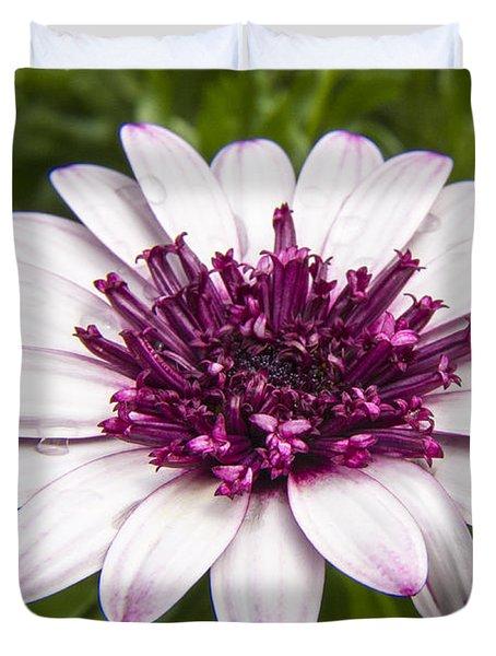 3d Berry White Cape Daisy - Osteospermum  Duvet Cover
