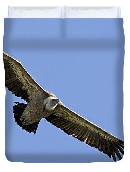 Griffon Vulture Gyps Fulvus Duvet Cover by Eyal Bartov