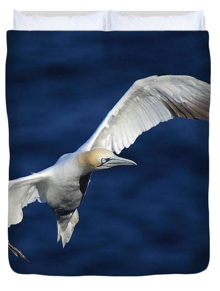 Northern Gannet In Flight Duvet Cover