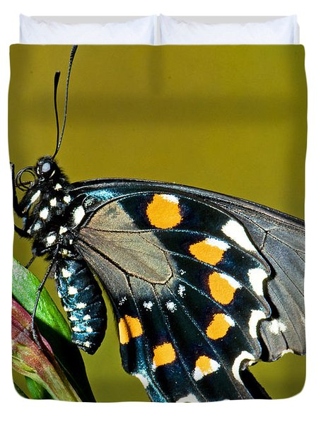 Pipevine Swallowtail Butterfly Duvet Cover by Millard H. Sharp