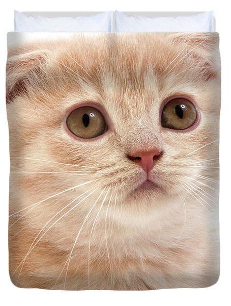 Scottish Fold Creme Duvet Cover