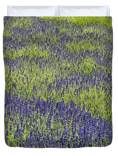 Lavendar Field Rows Of White And Purple Flowers Duvet Cover