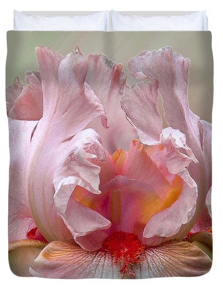 Pink Electrabrite Bearded Iris Duvet Cover