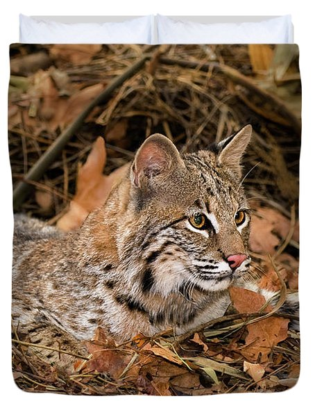611000006 Bobcat Felis Rufus Wildlife Rescue Duvet Cover by Dave Welling
