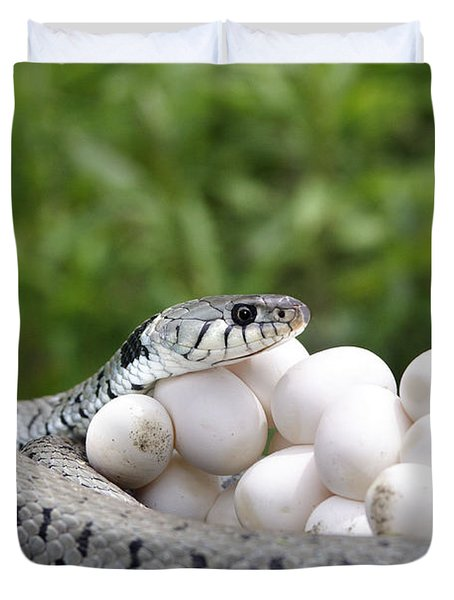 Grass Snake With Eggs Duvet Cover
