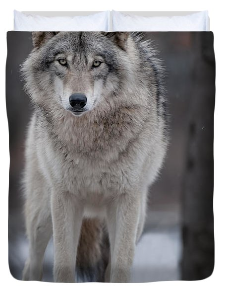 Timber Wolf  Duvet Cover by Wolves Only
