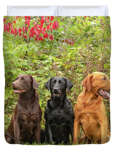 Chocolate Labrador Retriever Duvet Covers Page 4 Of 11 Fine Art America