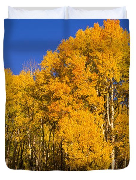 Low Angle View Of Aspen Trees Duvet Cover