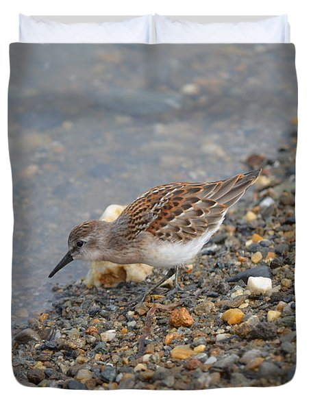 Duvet Cover featuring the photograph Semipalmated Sandpiper by James Petersen