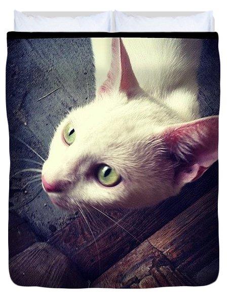 Kitty Knocking Duvet Cover