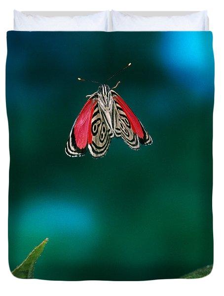 89 Butterfly In Flight Duvet Cover by Stephen Dalton