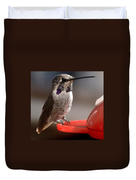 Duvet Cover featuring the photograph Female Anna's Sitting On Perch by Jay Milo