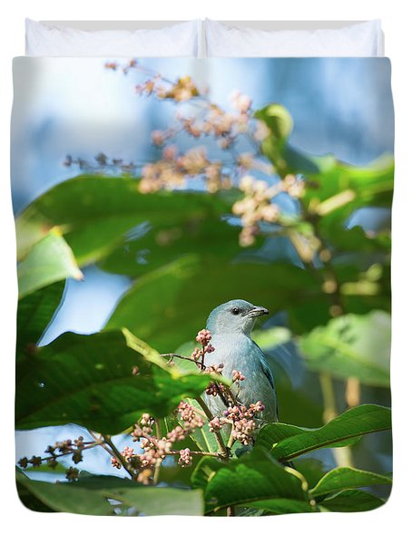 A Azure-shouldered Tanager On A Branch Duvet Cover