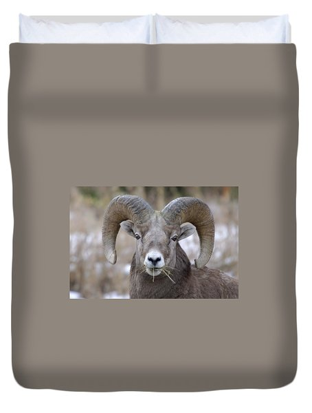 A Big Ram Caught With His Mouth Full Duvet Cover by Jeff Swan