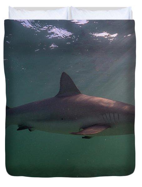 A Carribbean Reef Shark Swims Duvet Cover