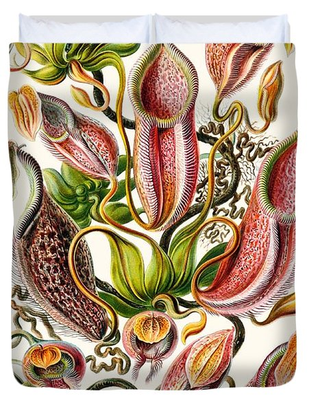 A Collection Of Nepenthaceae Duvet Cover by Ernst Haeckel