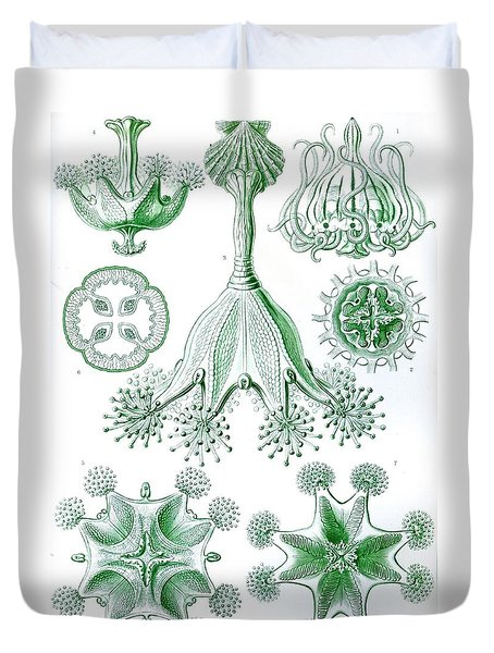 A Collection Of Stauromedusae Duvet Cover by Ernst Haeckel