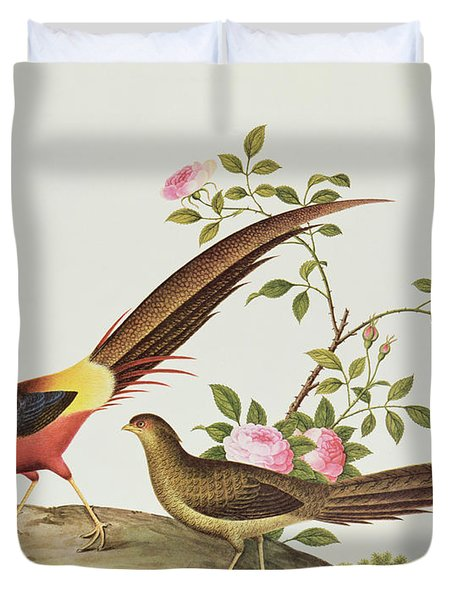 A Golden Pheasant Duvet Cover by Chinese School